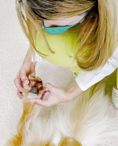 queimadura coxins - Queimaduras nos Coxins - Almofadinhas das Patas