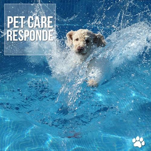 petcare responde - Calor e piscina: Como agir com cães e gatos?