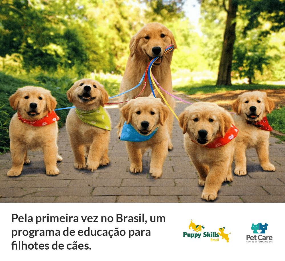"""programa puppy skills brasil aulas para filhotes 2 - Programa """"Puppy Skills Brasil"""": Aulas para filhotes"""