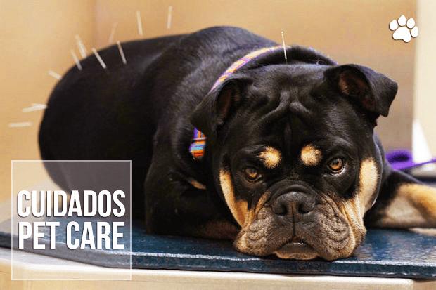 acupuntura veterinaria em caes e gatos - Acupuntura Veterinária em Cães e Gatos