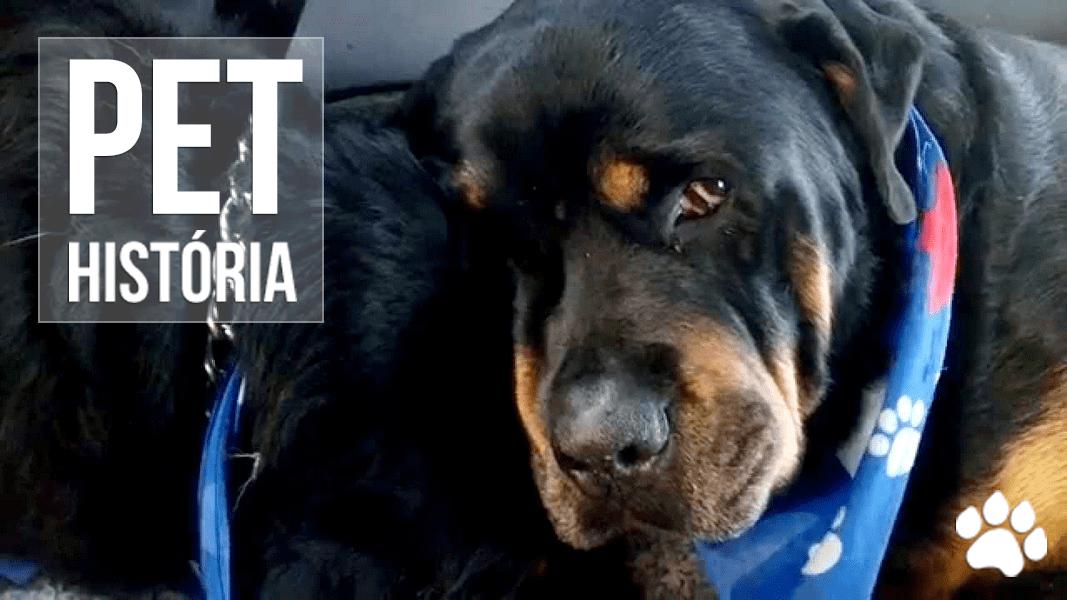 rottweiler se recusa a se separar do irmao morto - Rottweiler se recusa a se separar do irmão morto e emociona a internet