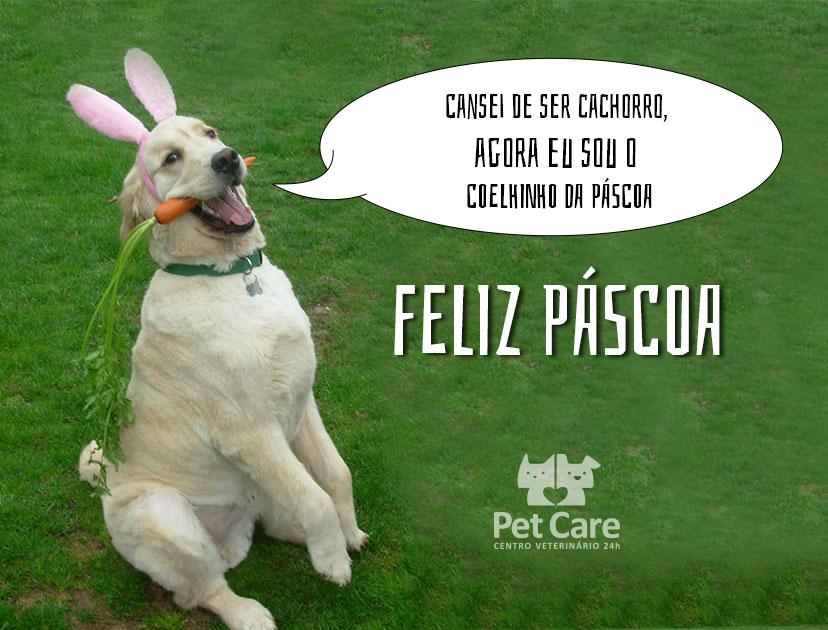 pet care ok - Cuidados na Páscoa: O chocolate é um perigo para o seu cão