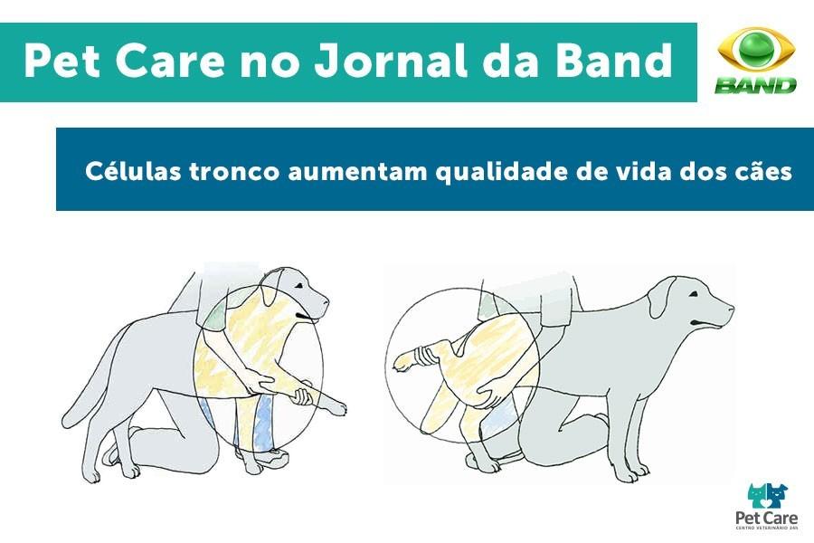 celulas tronco aumentam qualidade de vida dos caes - Células-tronco aumentam qualidade de vida dos cães