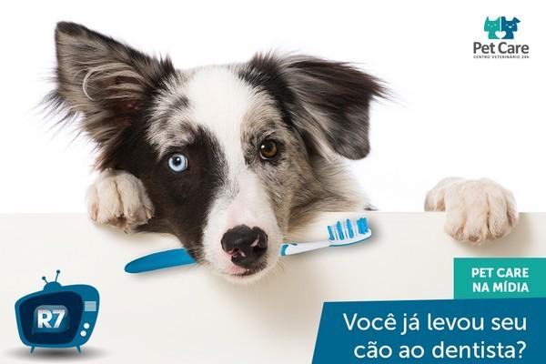 dentista para cachorro pet care - Dentista para cachorro: Saiba como é o tratamento