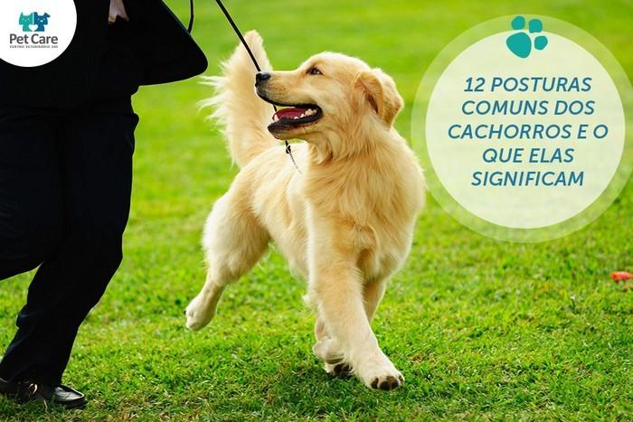12 posturas comuns dos cachorros e o que elas significam - 12 posturas comuns dos cachorros e o que elas significam