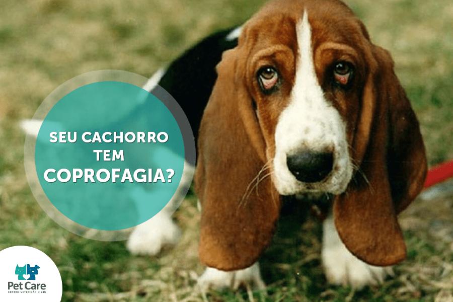 bbcb - Seu cachorro tem coprofagia? O que isso pode trazer de problemas e o que pode ser feito?