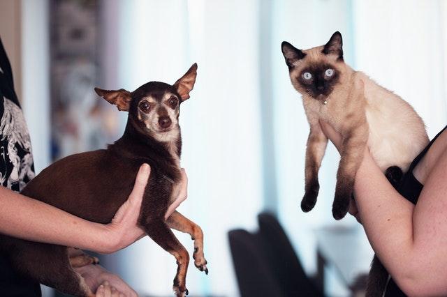 pexels sharon mccutcheon 1909802 - Linfoma em Cães e Gatos