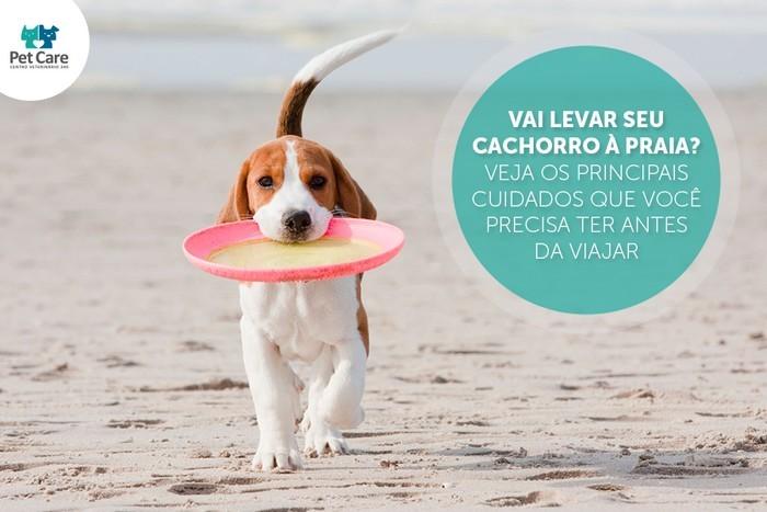 dirofilariose - Vai levar seu cachorro à praia? Veja os principais cuidados que você precisa ter antes da viajar