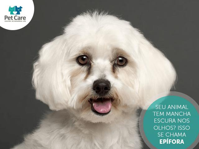 epifora em caes - Seu animal tem mancha escura nos olhos? Isso se chama Epífora