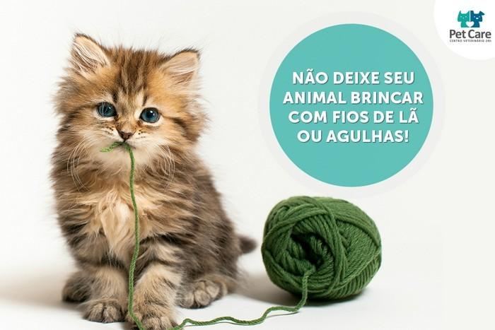 gato com fios de la ou agulhas - Não deixe seu animal brincar com fios de lã ou agulhas