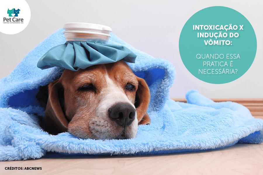 intoxicacao x inducao do vomito - Intoxicação x Indução do vômito: Quando essa pratica é necessária?