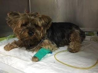 Hipertermia Pet Care 1