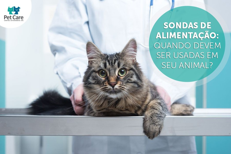 pet care sondas de alimentacao em animais - Sondas de alimentação: quando devem ser usadas em seu animal?