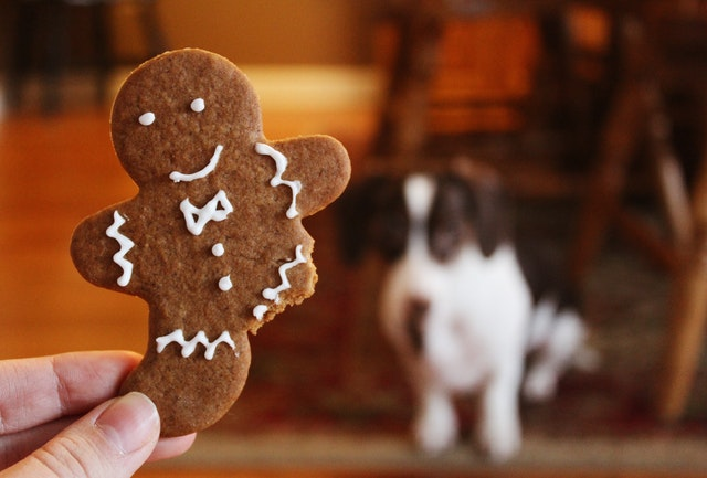 pexels noelle otto 906054 - Cookies de Natal para Cães