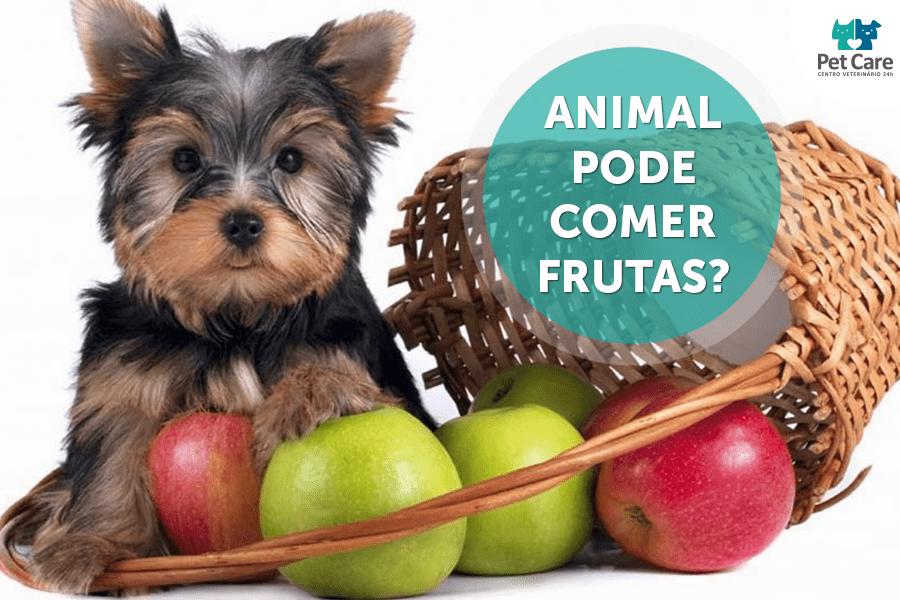 02 - Animal pode comer frutas?