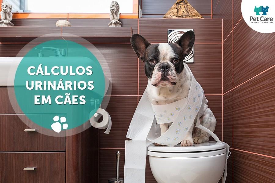 calculos urinarios em caes - Cálculos urinários em cães