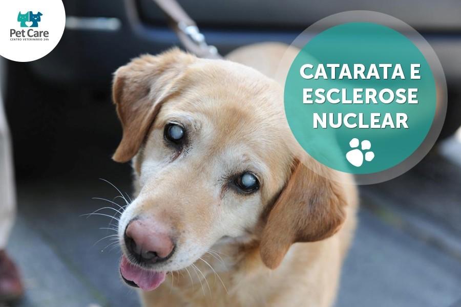 catarata e esclerose nuclear - Seu animal está com catarata? Saiba o que fazer