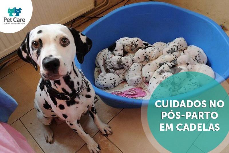 cuidados no pos parto em cadelas - Cuidados no pós-parto em cadelas