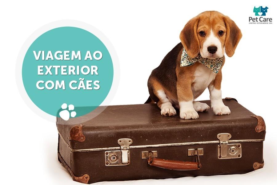 viagem ao exterior com caes - Viagem ao exterior com cães
