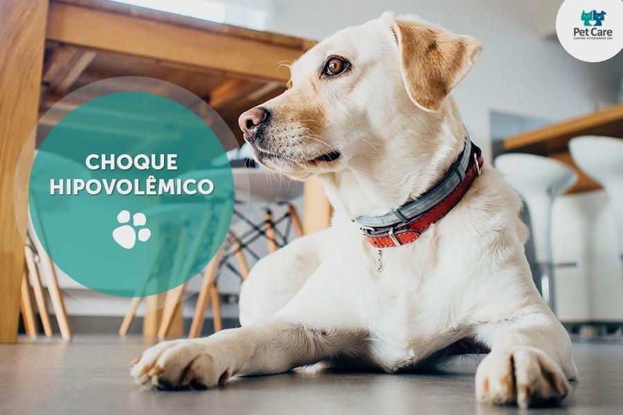 choque hipovolemico em caes e gatos - Choque hipovolêmico: condição grave que pode acometer seu animal