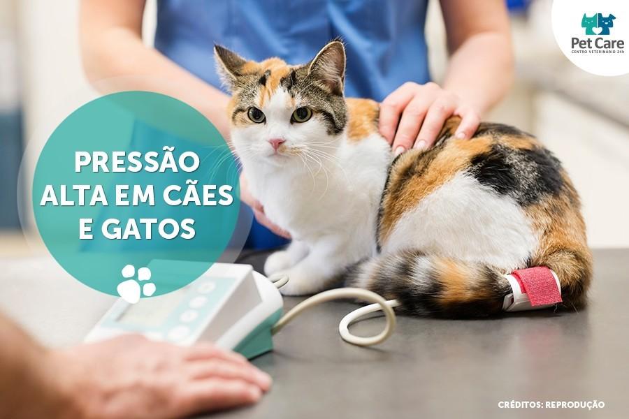 pressao alta em caes e gatos - Seu cão ou gato pode ter pressão alta