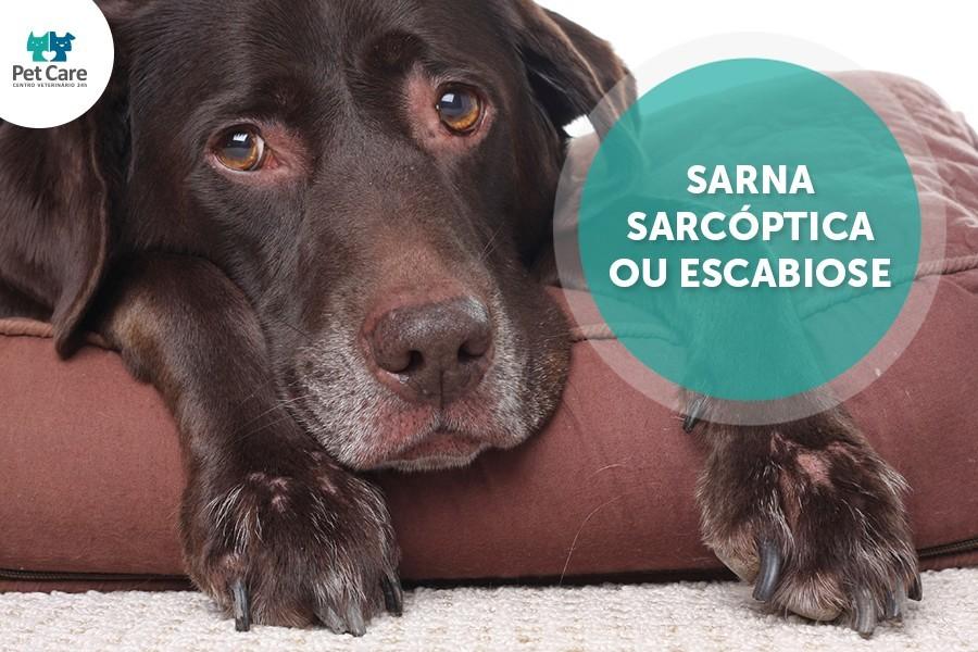 sarna sarcoptica em caes e gatos - Sarna Sarcóptica em cães e gatos