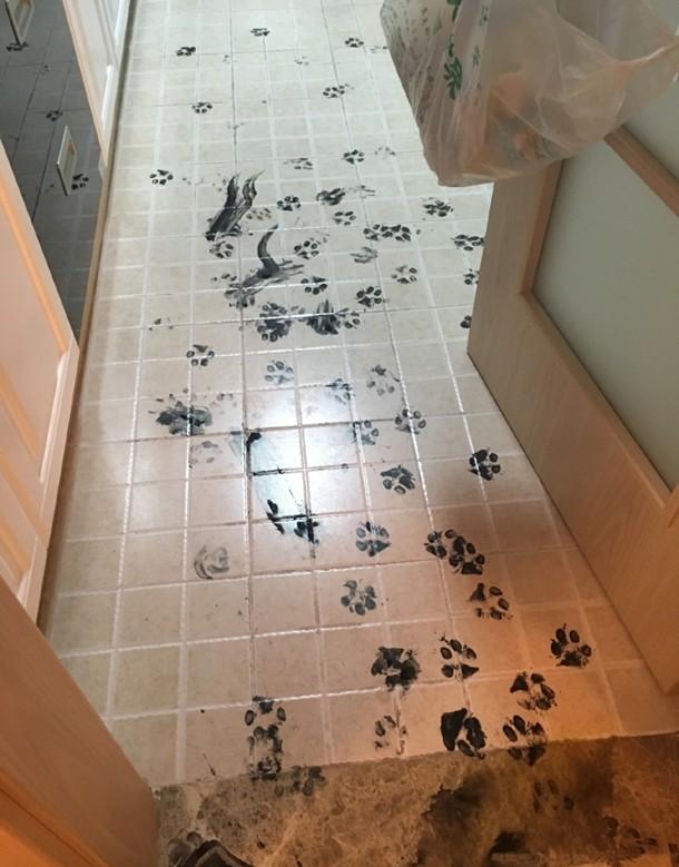 Husky Pet Care 9