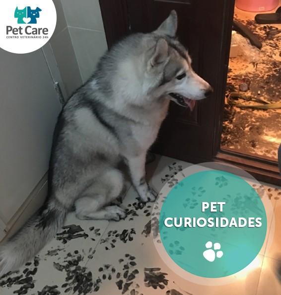 """husky pet care - Família deixa husky sozinho por apenas 3 horas e cachorro dá """"nova decoração"""" à casa"""