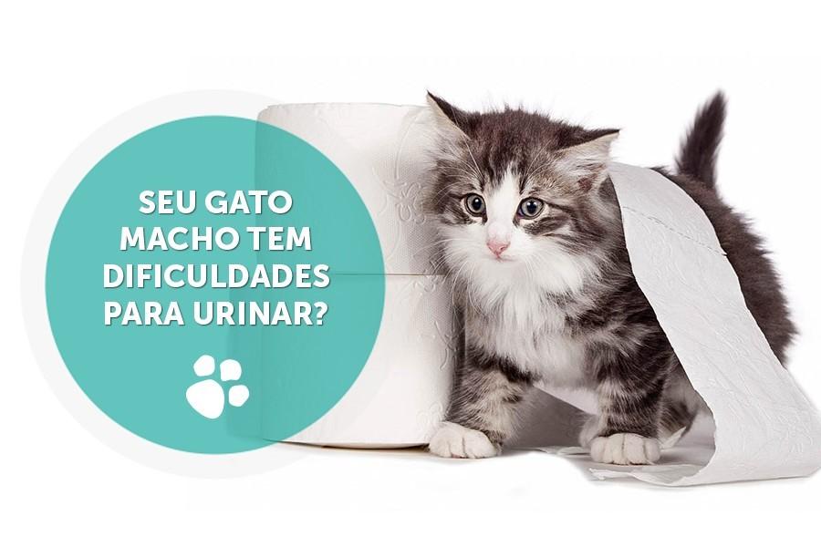caes e gatos tambem podem apresentar fimose - Cães e gatos também podem apresentar fimose