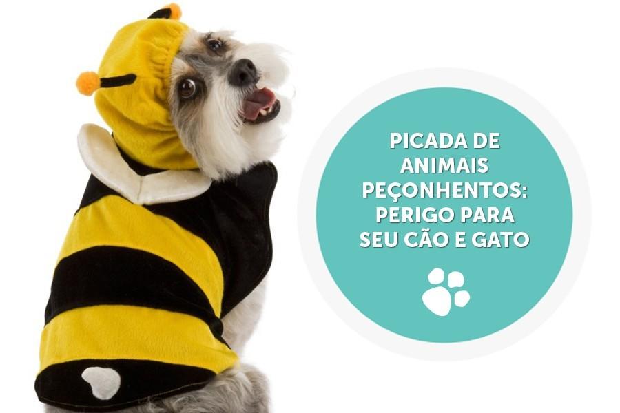 picada de animais peconhentos perigo para seu cao e gato - Picada de animais peçonhentos: perigo para seu cão e gato