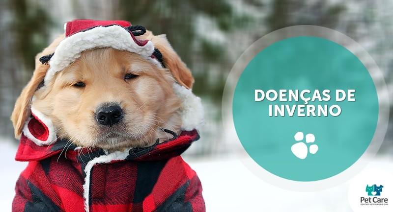 problemas de saude em caes e gatos no inverno - Problemas de saúde em cães e gatos no inverno