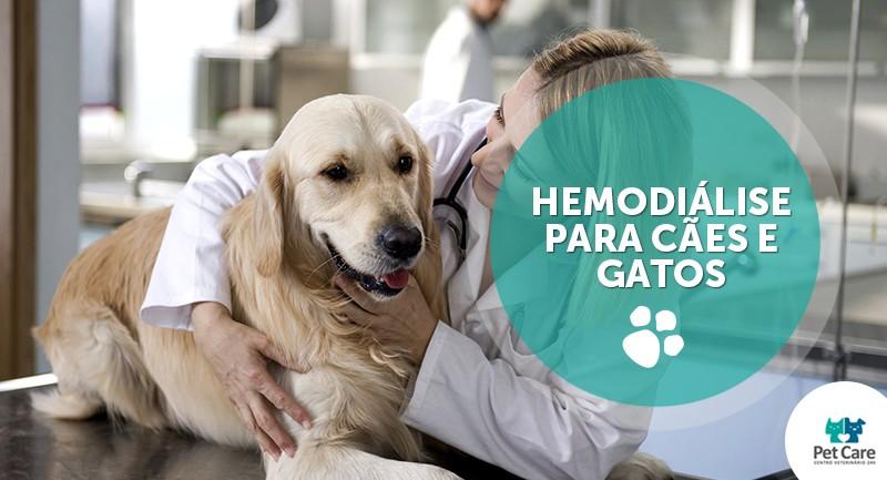 hemodialise para caes e gatos - Hemodiálise para cães e gatos