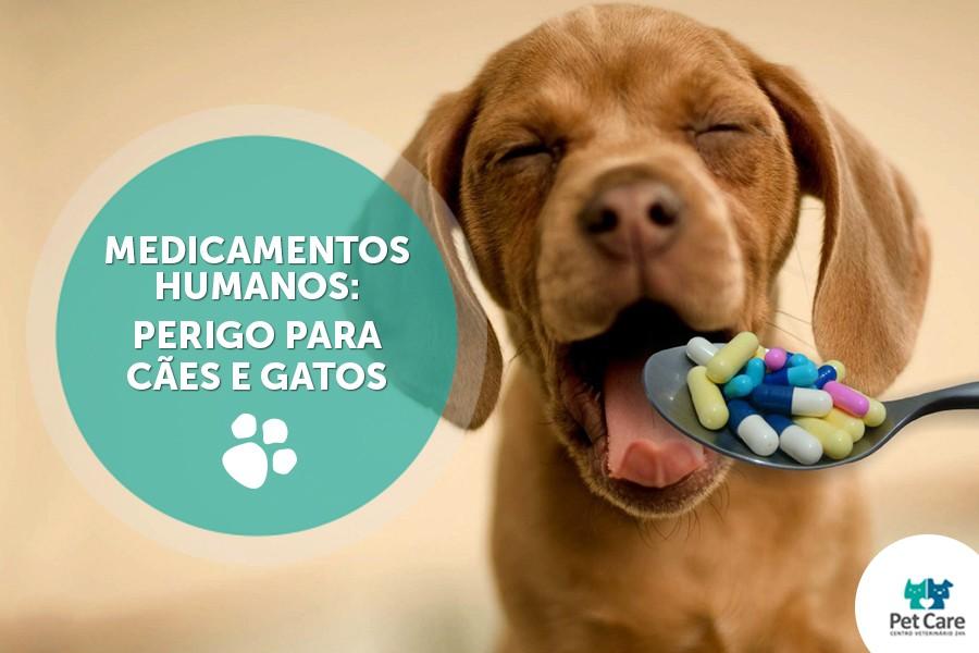 medicamentos humanos sao perigosos para caes e gatos - Medicamentos humanos são perigosos para cães e gatos