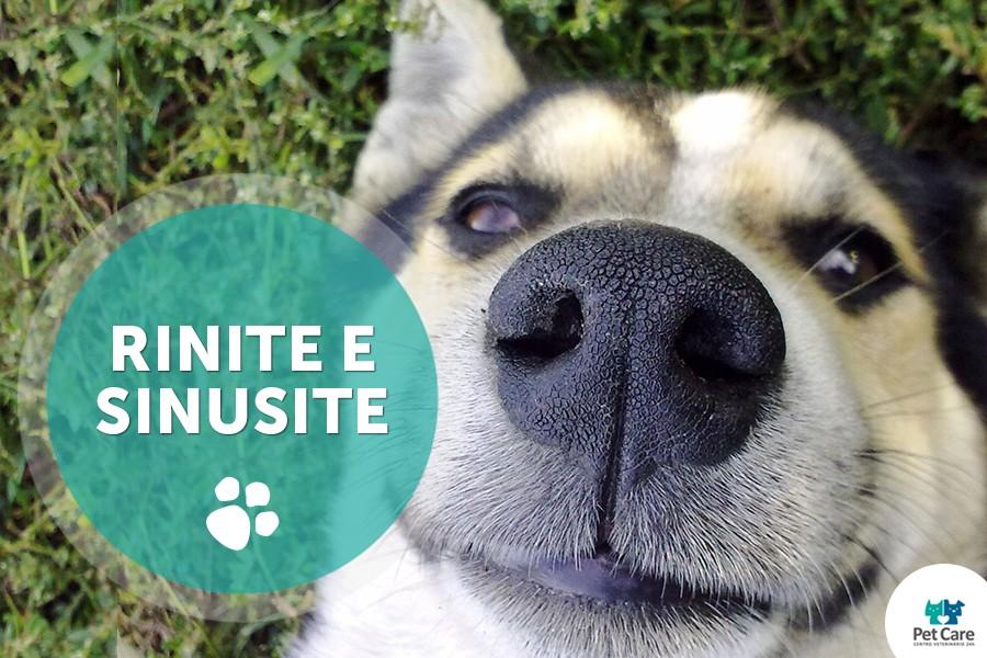 rinite e sinusite em caes - Rinite e sinusite em cães