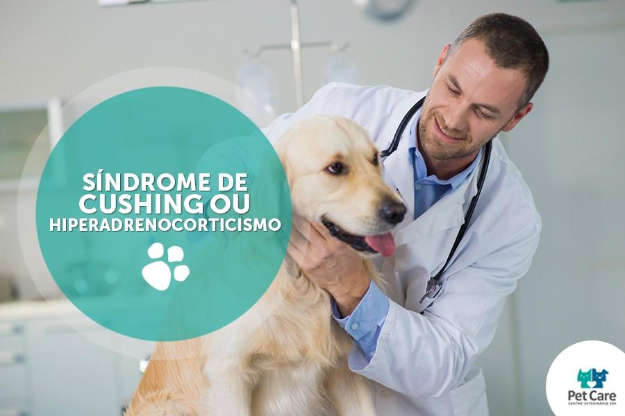 sindrome de cushing ou hiperadrenocorticismo - Síndrome de Cushing ou Hiperadrenocorticismo: saiba mais sobre essa doença