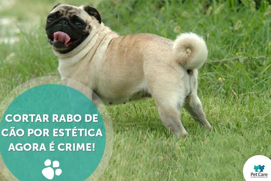 cortarraboblog - Cortar rabo de cão por estética agora é CRIME