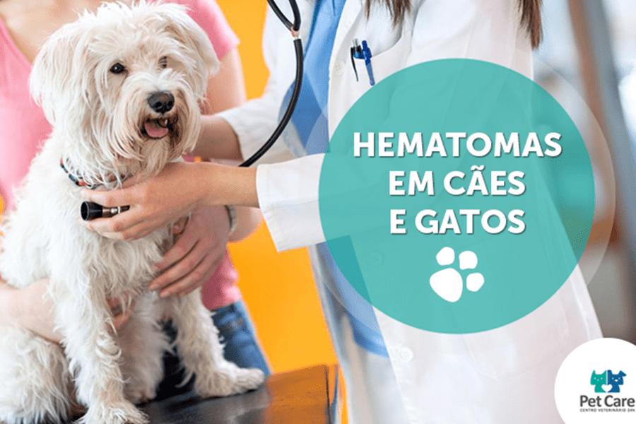 hematomas em caes gatos - Hematomas em cães e gatos