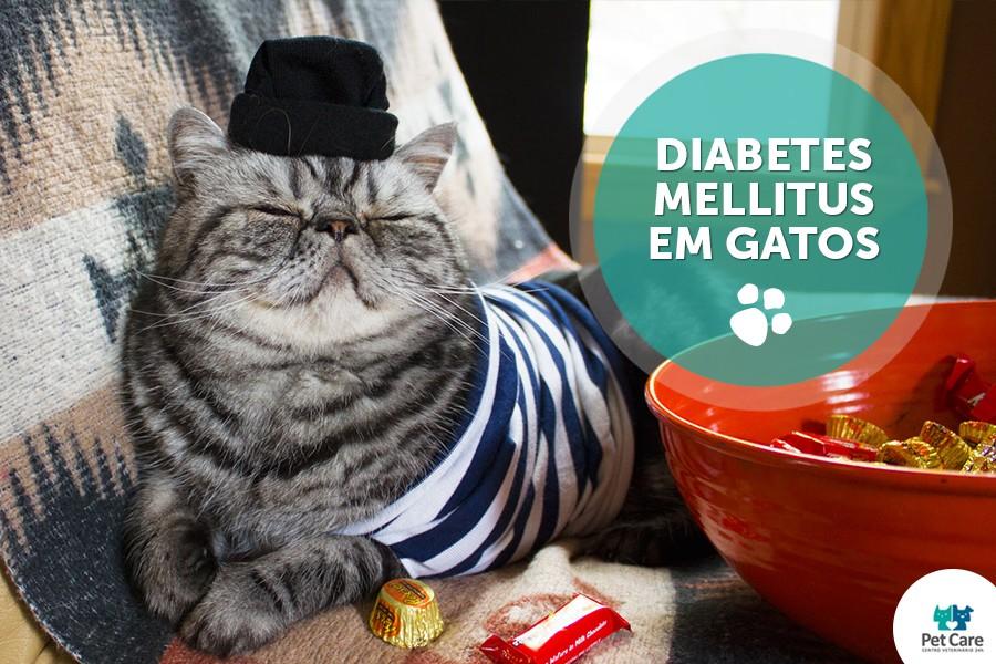 principais perguntas de diabetes mellitus em gatos - Principais perguntas de Diabetes Mellitus em Gatos
