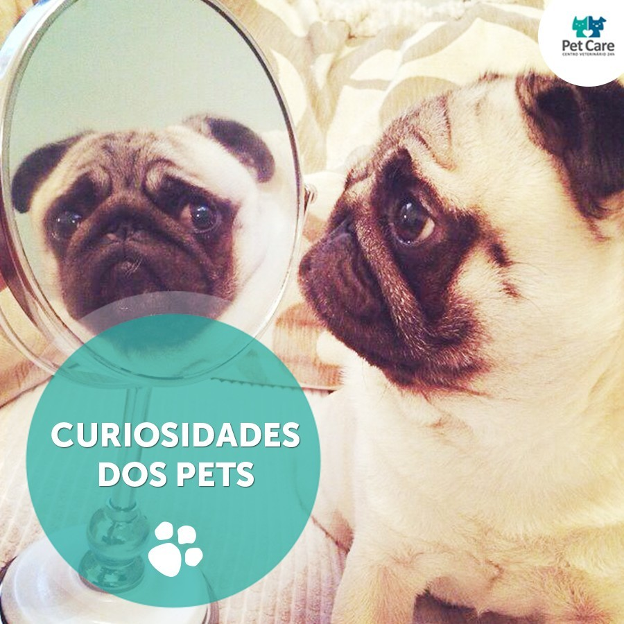 curiosidades sobre o comportamento de caes e gatos - Curiosidades sobre o comportamento de cães e gatos