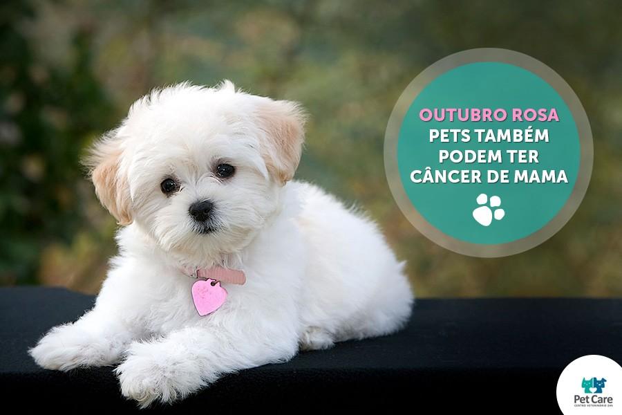 outubrorosablog - Outubro Rosa - Pets também podem ter câncer de mama