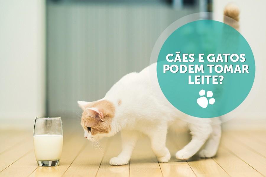 caes e gatos podem tomar leite - Cães e gatos podem tomar leite?