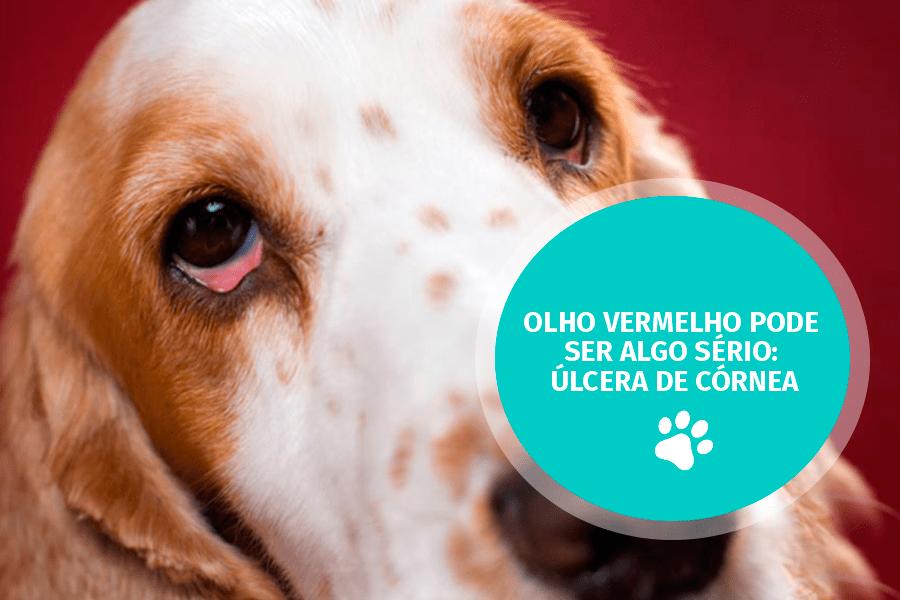 pet care1 - Olho vermelho pode ser algo sério: úlcera de córnea