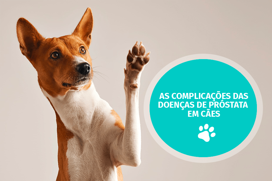 petcare - As complicações das doenças de próstata em cães