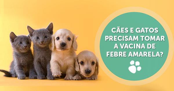 caes_e_gatos_precisam_tomar_vacina_de_febre_amarela
