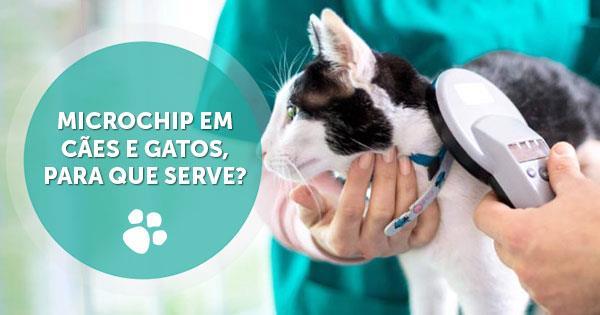 microchip caes gatos para que serve3 - Microchip em cães e gatos, para que serve?