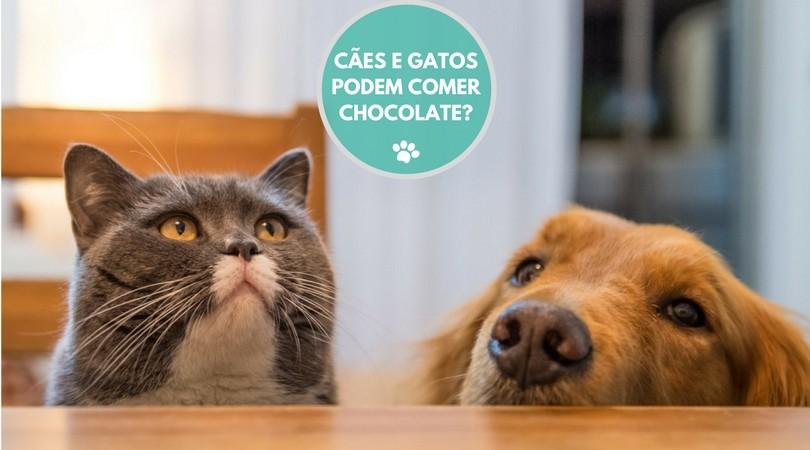 caes e gatos podem comer chocolate  - CÃES E GATOS PODEM COMER CHOCOLATE?