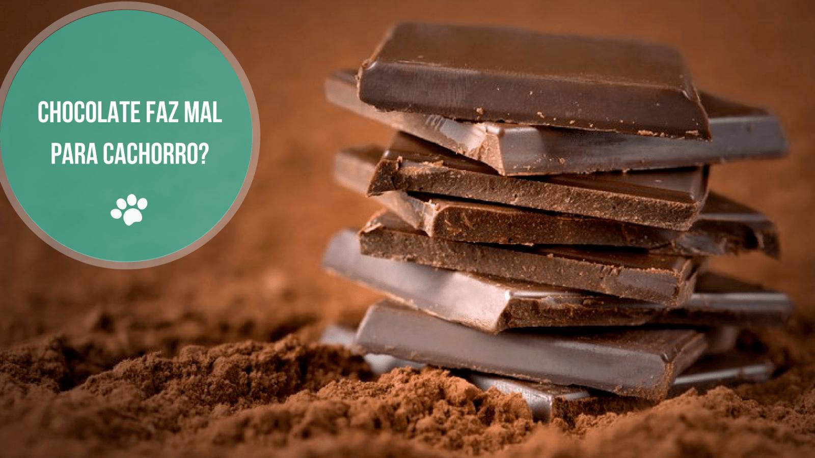 chocolate faz mal para cachorro1 - CHOCOLATE FAZ MAL PRA CACHORRO?