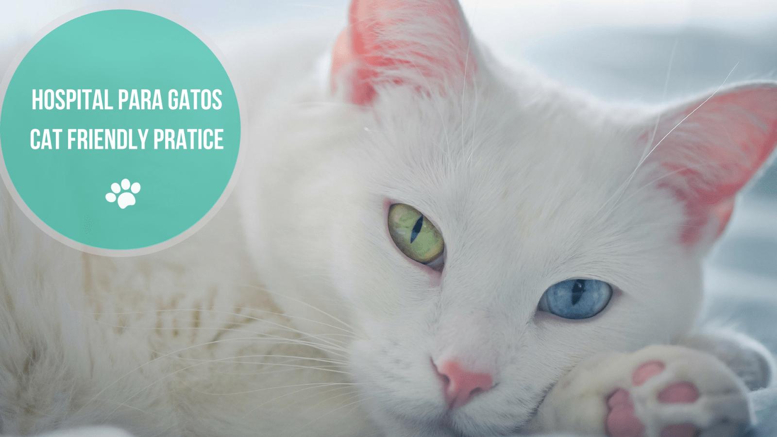 hospital para gatos cat friendly - HOSPITAL PARA GATOS - CAT FRIENDLY PRATICE