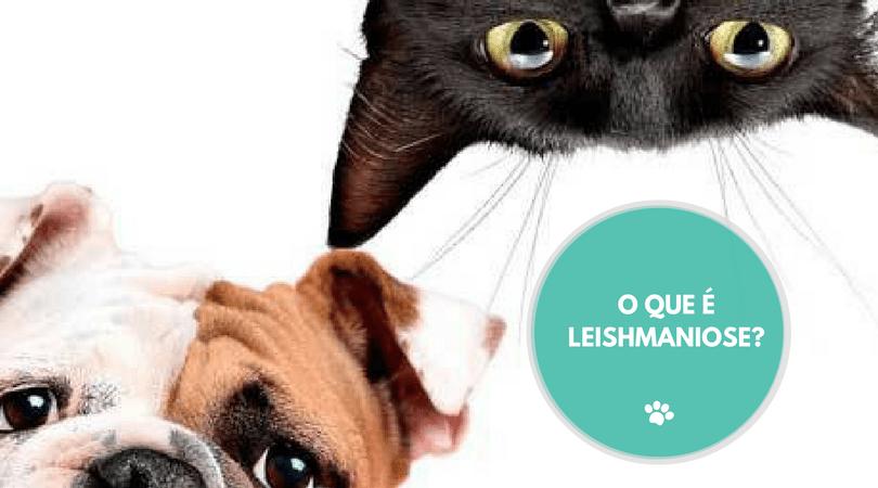 o que e leishmaniose 1 - O QUE É A LEISHMANIOSE?