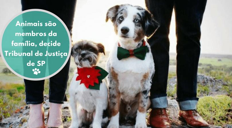 animais sao membros da familia decide tribunal de justica de sp - ANIMAIS SÃO MEMBROS DA FAMÍLIA, DECIDE TRIBUNAL DE JUSTIÇA DE SP